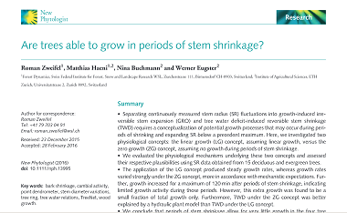 Are trees able to grow in periods of stem shrinkage?